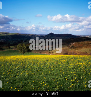 Co Armagh, Slieve Gullion, Ireland - Stock Photo