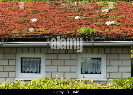 A Sedum Or Living Roof On A Pitched Roof Of A Public