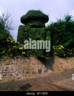 Co Down, Scarva, 19th C. topiary figure of William III at railway station, Ireland - Stock Photo