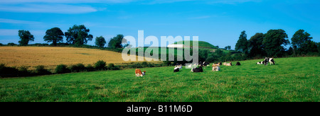 Newgrange, County Meath, Ireland, Holstein-Friesian cattle - Stock Photo