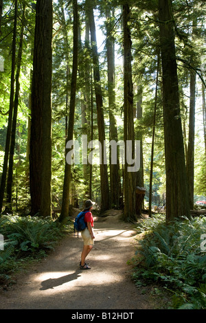 Female hiker on trail through old growth stands of trees including Western Red Cedar Cathedral Grove Vancouver island - Stock Photo