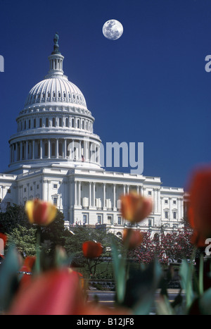 RED YELLOW TULIPS IN FRONT OF CAPITOL BUILDING WASHINGTON DC USA - Stock Photo
