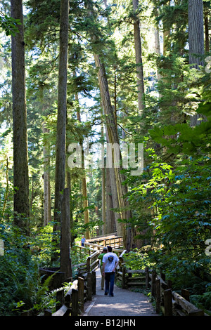 Tourists on trail through old growth trees in Cathedral Grove Vancouver island Canada - Stock Photo