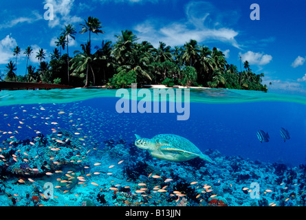 Turtle and Island Chelonia Mydas Digital Composition - Stock Photo