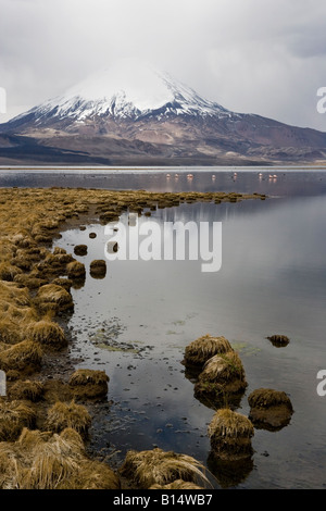 Reflection and flamingoes on Mount Parinacota in Lauca National Park (Chile) and Sajama National Park (Boliva) - Stock Photo