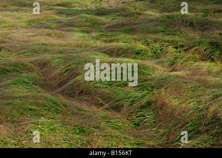 Wet grasses flattened after rain mimic waves in the sea Killin Perthshire Scotland - Stock Photo