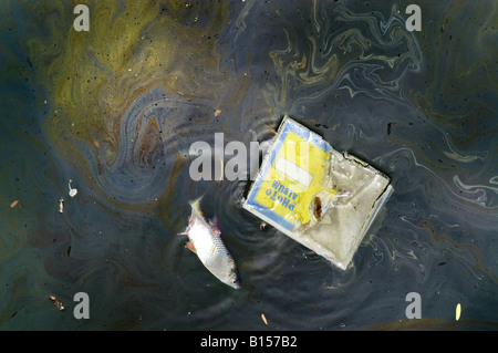 Dead fish and photo album floating in oil greasy polluted water river on surface ecology disaster pollution - Stock Photo