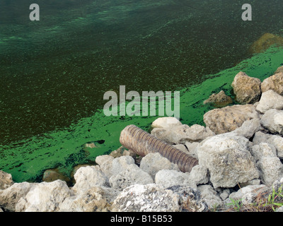 algae and water pollution pdf