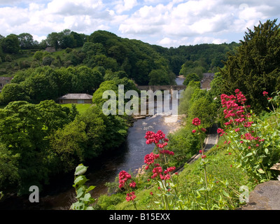Stone arch Green Bridge over the river Swale with red valerian flowers in the foreground in Richmond North Yorkshire - Stock Photo