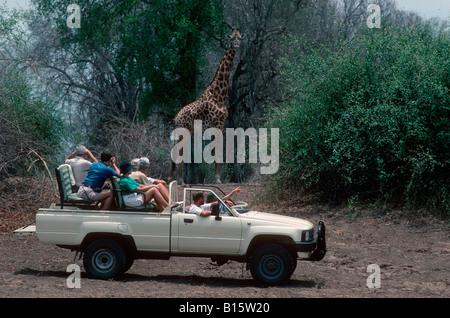 Tourists in open vehicle game viewing giraffe South Luangwa National Park Zambia - Stock Photo