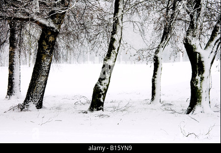 A row or line of five tree trunks covered in snow around the edge of a field in winter at Coate Water Country Park, - Stock Photo