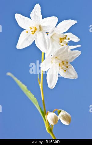 White flowers stock photo 222549994 alamy arum lily white flowers and blue sky stock photo mightylinksfo