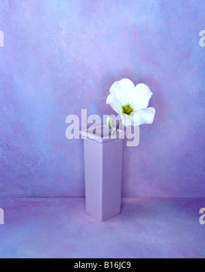 2 of a series of portrait format colour color pictures this one is of a white flower on a hand painted lilac background - Stock Photo