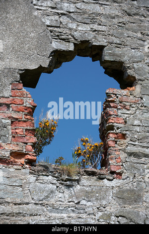 blue sky showing through and plants growing on ruined section of old stone mill building county down northern ireland - Stock Photo