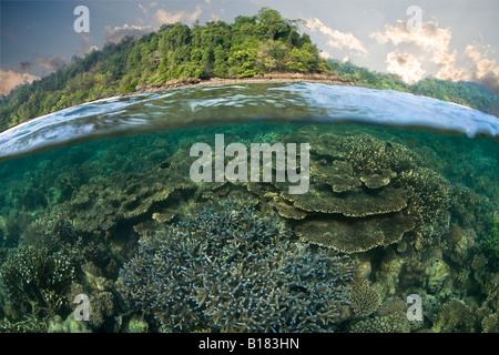 coral reef grows in the shallows Raja Ampat West Papua Indonesia - Stock Photo