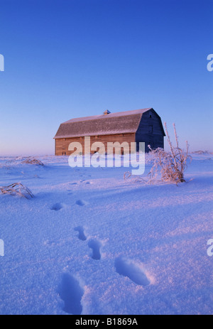 Rabbit tracks in snow lead to barn; Near Saskatoon, Saskatchewan, Canada. - Stock Photo