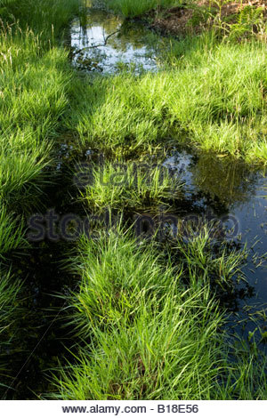 Flooded grassland, Essex, UK. - Stock Photo