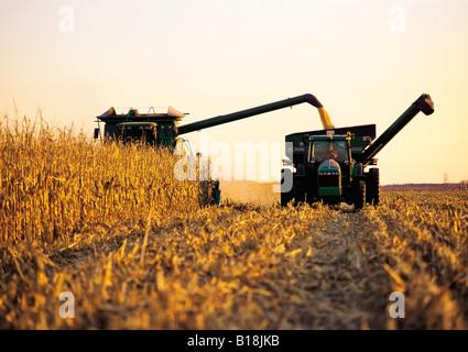 a combine unloads feed/grain corn into a grain wagon on the go, near Carey, Manitoba, Canada - Stock Photo