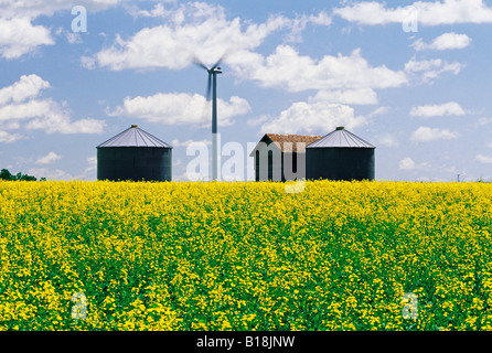 canola field with old grain bins and wind turbine in the background, near Somerset, Manitoba, Canada - Stock Photo