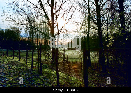 sun rising through trees and fence - Stock Photo