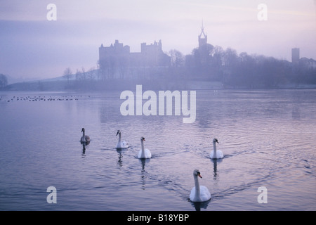 Swans at Linlithgow Loch - Stock Photo