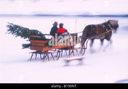 Carrying a freshly cut Christmas Holiday tree, a couple returns home in their one-horse open sleigh. - Stock Photo