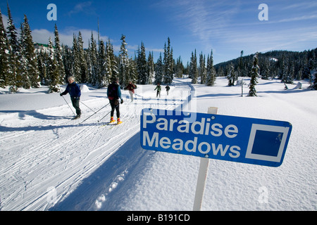 Cross Country Skiers enjoying a sunny day cross country skiing on Paradise Meadows, Mt. Washington, Vancouver Island, - Stock Photo