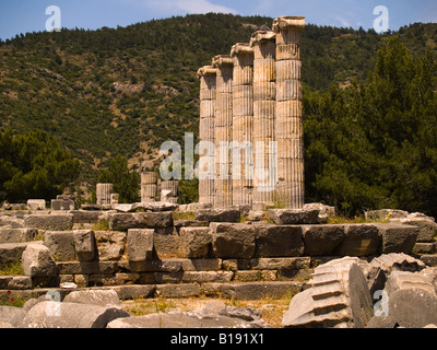 Columns of the Athena Temple, Priene, Turkey - Stock Photo
