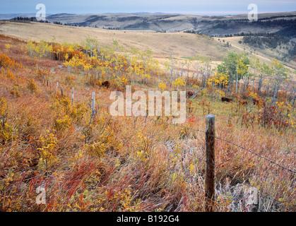Fall colours and rangeland, Porcupine Hills, Alberta, Canada. - Stock Photo