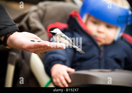 A bird eating out of a person's hand - Stock Photo