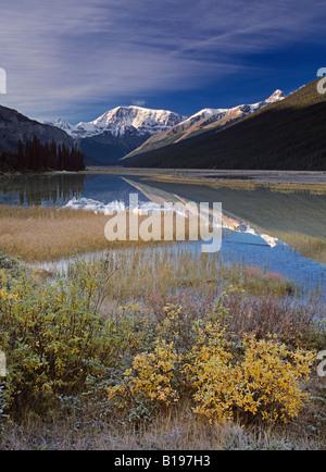 Mount Kitchener reflected in pond near the Beauty Creek Hostel, Jasper National Park, Alberta, Canada - Stock Photo