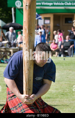 Tossing the Caber,athlete, athletic, attire, caber toss, clan, clothing, competition at Strathmore Highland Games - Stock Photo