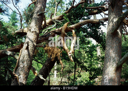 Fallen trees and broken branches in woods after storm - Stock Photo