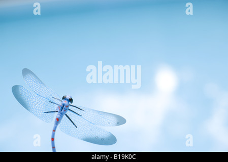 Dragonfly, close-up - Stock Photo