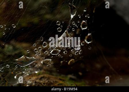 Rain drops from overnight rain on a Spiders Web - Stock Photo