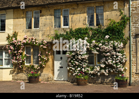 Roses encircle and frame cottage windows in Lacock in June - Stock Photo