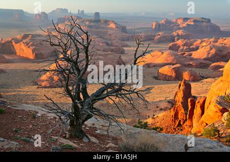 Dead tree on Hunt's Mesa in Monument Valley, Arizona - Stock Photo