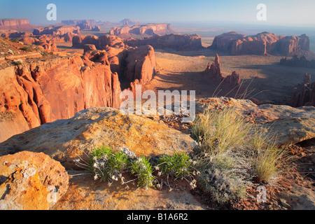 Wildflowers on Hunt's Mesa in Monument Valley, Arizona - Stock Photo