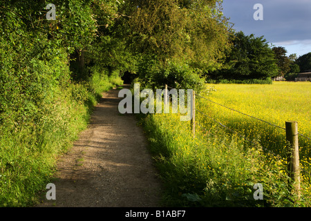 Country footpath between woods and a field in Chilterns countryside Buckinghamshire UK - Stock Photo