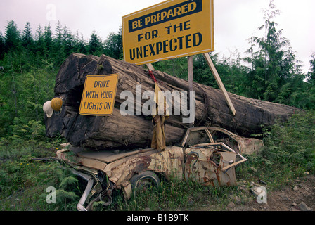 Warning Road Sign, Caution Signs - Car crushed by Big Tree on Active Logging Road in West Coast Forest, British - Stock Photo