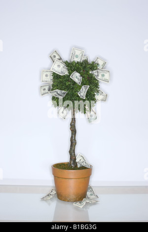 Money growing on a tree - Stock Photo