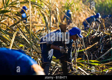 Sugarcane cutters Cosmopolis city region Sao Paulo State Brazil Biofuel Ester ethanol and sugar plant May 2008 - Stock Photo