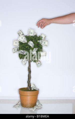 Money growing on tree with hand reaching to pick a dollar bill - Stock Photo