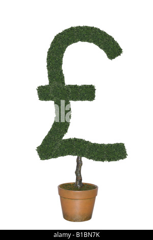 Topiary tree in shape of British pound currency symbol cut out on white background - Stock Photo