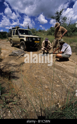 View three adult men hunting expedition looking at ground for signs of game Namibia Africa backgrounds landscapes - Stock Photo