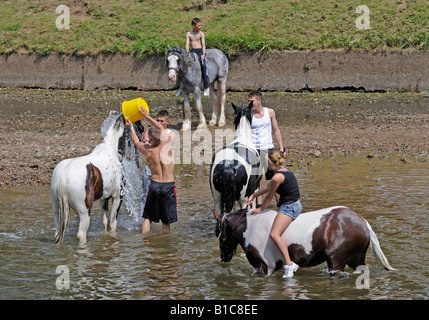 Gypsy travellers washing horses in River Eden. Appleby Horse Fair. Appleby-in-Westmorland, Cumbria, England, United - Stock Photo