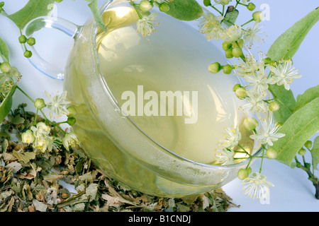 large-leaved lime, lime tree (Tilia platyphyllos), Lime, a cup of tea and dried blooms - Stock Photo