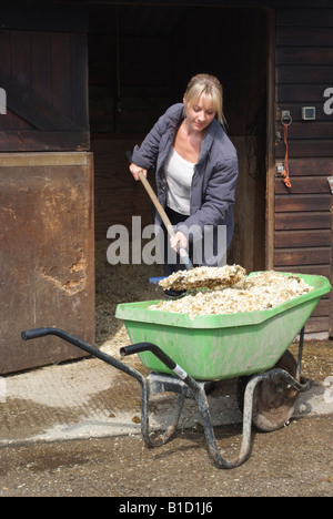 Woman using a wheelbarrow to remove the wood shavings bedding from a horses stable - Stock Photo