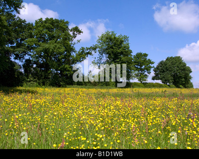Summer meadow in the Chilterns - Stock Photo