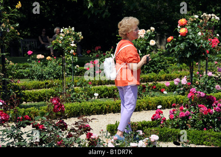 Paris, France, Caucasian senior Lady admiring roses at Bagatelle Park - Stock Photo